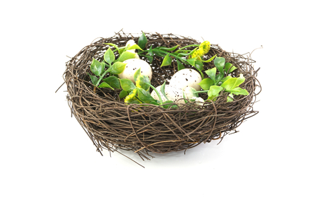 bird nest isolated on white background