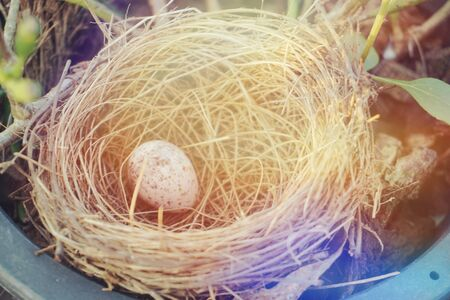 bird nest with egg in the garden with filter color