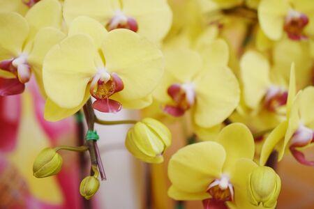 Beautiful yellow orchids flower bouquet