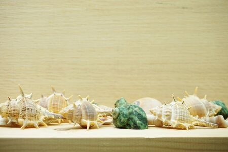 seashell marine decoration with space copy on wooden background Banco de Imagens