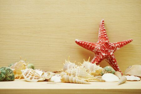 Red starfish and seashell marine decoration with space copy on wooden background Banco de Imagens