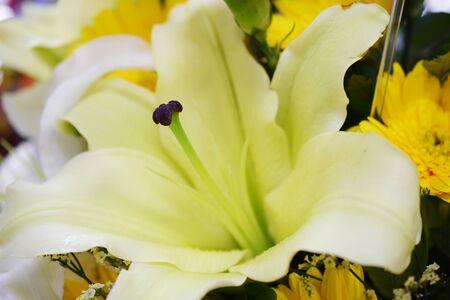 Beautiful White Lily flower bouquet Close up Zdjęcie Seryjne