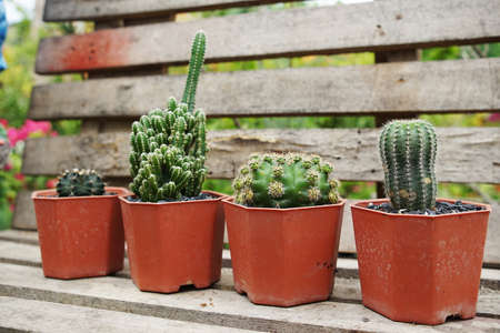 Collection of various cactus and succulent plants in home garden