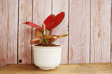 Green home houseplants on wooden background