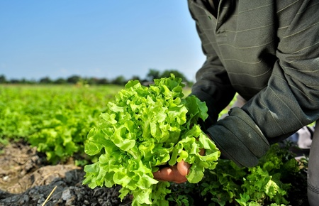 vegetable gardening: Vegetable garden