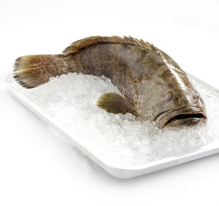 visboer: Verse Grouper op ijs Stockfoto