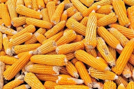 husks: Corn field