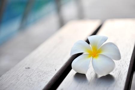 Floating frangipani Stock Photo