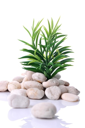 zen stones and green tree