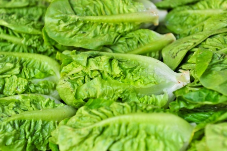 lettuce Stock Photo - 15141934