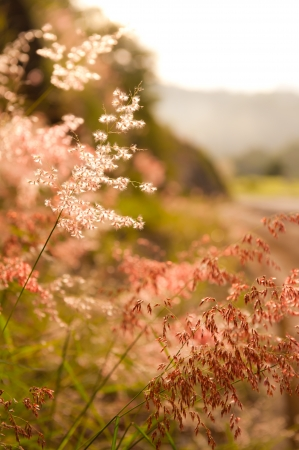 wild flowers along lonely highway Stock Photo