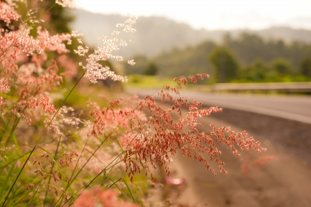 wild flowers along lonely highway Banco de Imagens