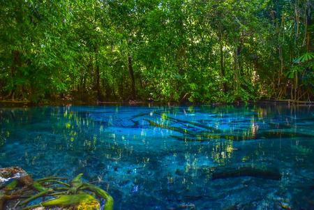 selva: Parque Nacional de selva tropical en Sra Morakot, Krabi Tailandia