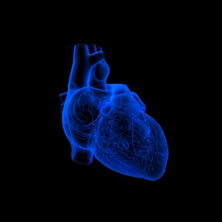 corazones azules: coraz�n humano - Anatom�a