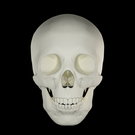 Human Skull - Front View Stock Photo