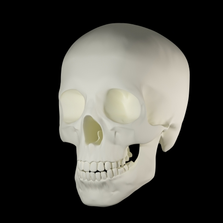 Human Skull - right front view Stock Photo