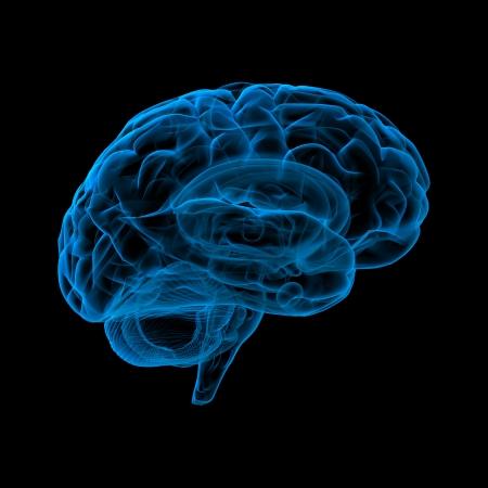 cerebro humano: El cerebro humano, en vista de rayos X Foto de archivo