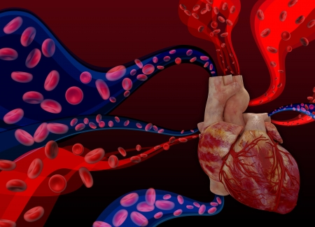 Heart on a with blood cells