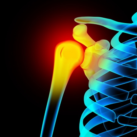 Shoulder  Scapula  Clavicle - Anatomy Bones Stock Photo