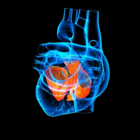 3d render Heart atrium - side view