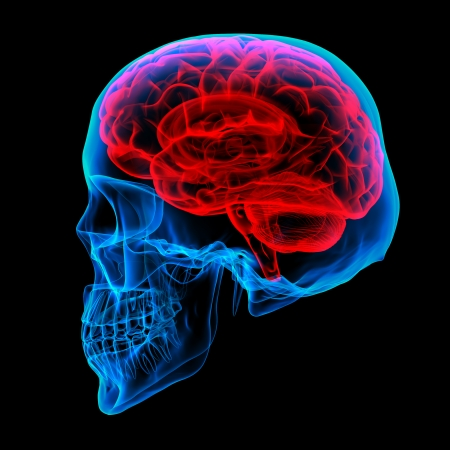 x xray: Human brain X ray - side view