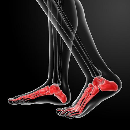 healt: Human Skeletal  Feet - side view Stock Photo