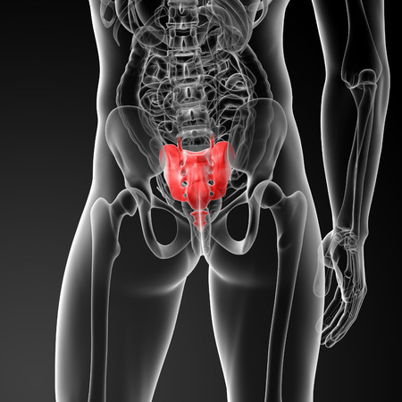 3d render illustration sacrum bone - back view