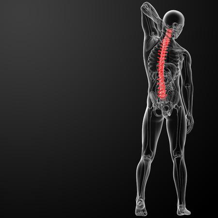 colonna vertebrale: 3d rencder Spine Anatomia Umana Archivio Fotografico