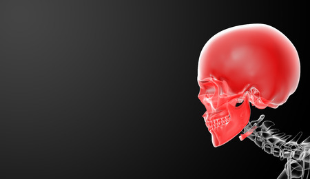 3d render skull on black background - side view photo