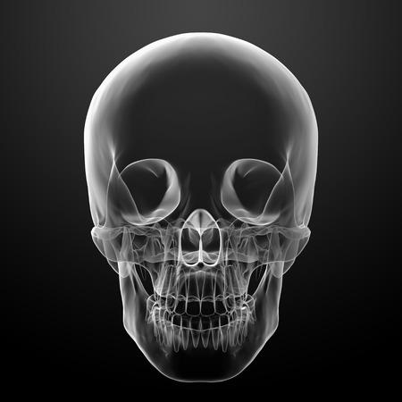 3d render skull on black background - front view