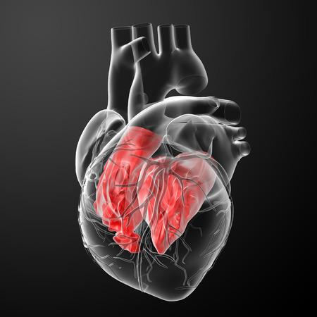 cardiovascular disorders: 3d render Heart atrium - back view