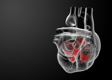 tricuspid valve: 3d render Heart atrium - side view