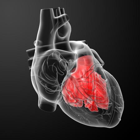 3d render Heart atrium - front view