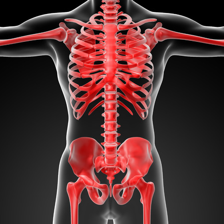 3d rendered skeleton - close up front view