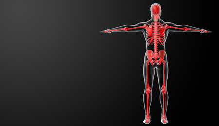 3d rendered red skeleton - back view