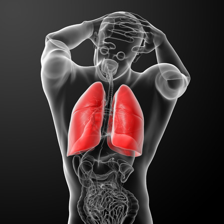 respire: Human respiratory system in x-ray  - lungs back view