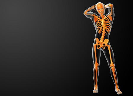 3d rendered orang skeleton - front view photo