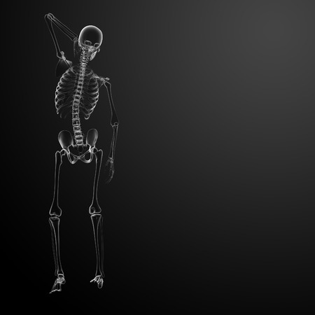 3d render Skeleton X-rays - back view Stock Photo