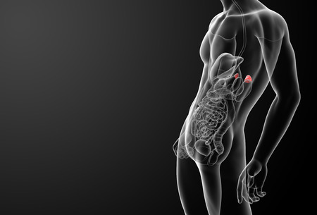 3d render adrenal anatomy - side view Stock Photo