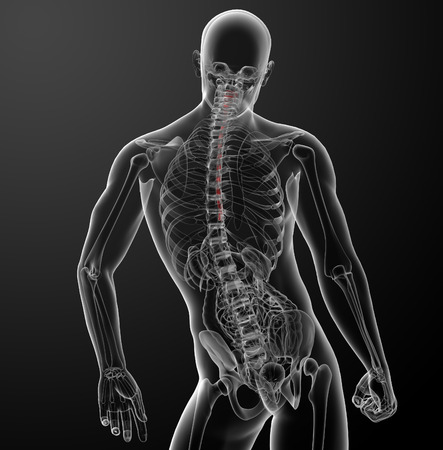 3d rendered illustration of the esophagus - back view Stock Photo