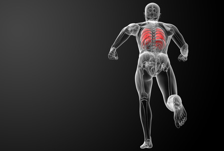 bronchiole: Human respiratory system in x-ray - lungs back view Stock Photo