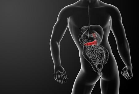 3d render gallblader and pancrease - back view photo
