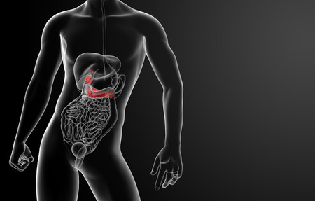 3d render gallblader and pancrease - front view photo