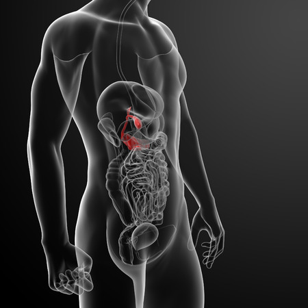 3d render gallblader and pancrease - side view photo
