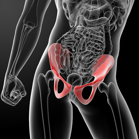 3d render pelvis under the X-rays - front view Stock Photo - 26753899