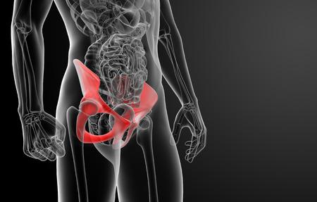 pelvis: 3d render pelvis under the X-rays -  close - up Stock Photo