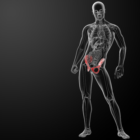 3d render pelvis under the X-rays - front view Stock Photo - 26753902