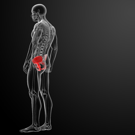 3d render pelvis under the X-rays - side view Stock Photo - 26753903