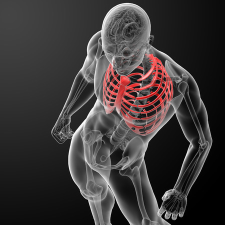 3d render illustration of the rib cage - top view illustration