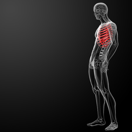 3d render illustration of the rib cage - side view illustration